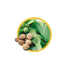 Экстракт листьев грецкого ореха