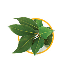 Листья лавра благородного