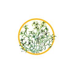 Трава сушеницы топяной