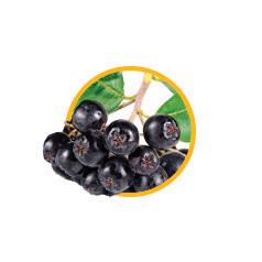 Экстракт аронии черноплодной
