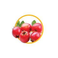 Плоды боярышника кроваво-красного